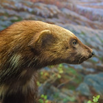 Dennis Caspe's photo